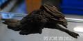 Driftwood For Freshwater Fish Aquariums