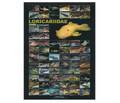 Pleco Poster - (AZOO Loricariidae Poster)