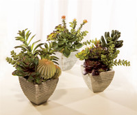 Timeless Potted Succulents | 3 Assorted