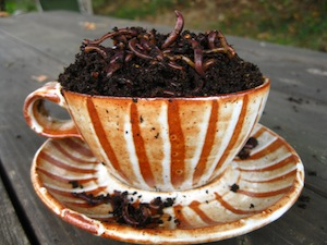 cup-of-red-worms.jpg