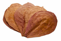 Indian Almond Leaves (Terminilia Catappa) 20 leaves or ~40g