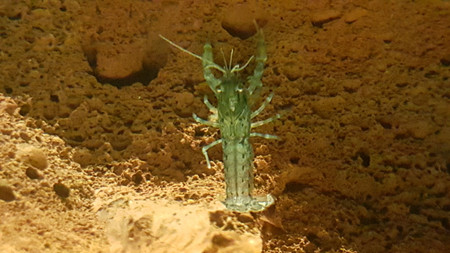 Blue Dwarf Crayfish are peaceful and don't eat plants.