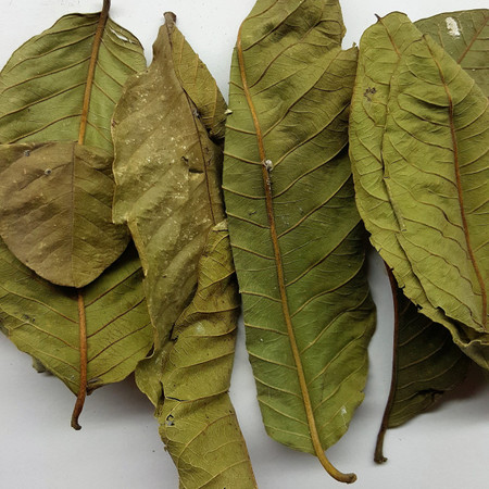 Guava Leaves help enhance your aquarium and grow biofilm for your shrimp.