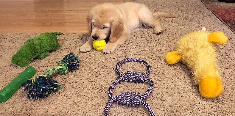 Choosing the Best Dog Toy for your New Puppy