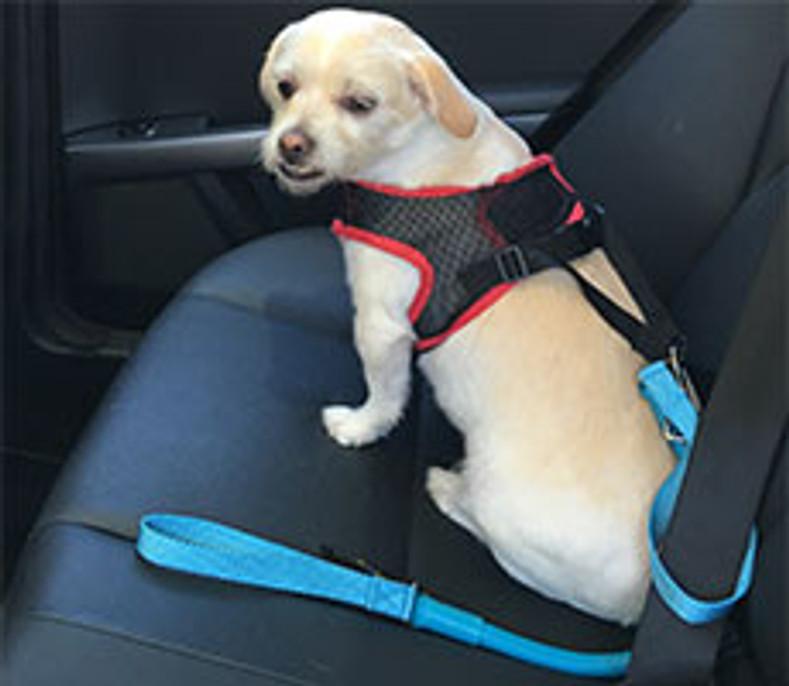 Need a Seatbelt Restraint?  WACKYwalk'r and URBANwalk'r can be used as a Seatbelt Restraint for your dog.