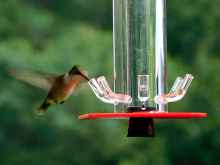 dew humming ocean htm envy drop glass bird hummingbird ddocnlarge p feeder yard