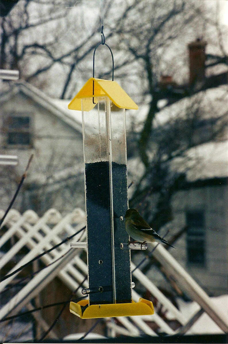 feeders perky feeder metal bf pet us finch