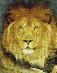 LION , 2 PLY , DOUBLE SIDED HEAVY WEIGHT - R