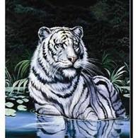 WADING TIGER - R