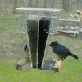 Dual Window Bird Feeder