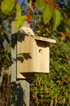 Cypress Chickadee Joy Box