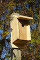 Eastern Bluebird and Swallow Joy Box