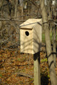 Screech Owl Joy Box