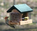 Cedar Two Suet and A Seed Bird Feeder