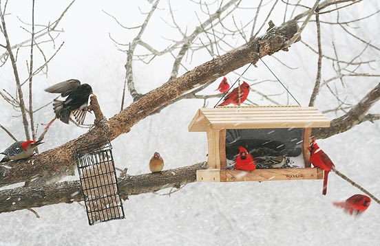 Late Winter Birdfeeding Jcs Wildlife