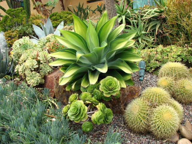 Landscape plants ideas for Landscaping plants