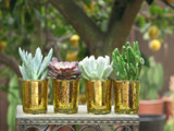 10 Glass Party Succulent Plant Mini Table Decoration Gold