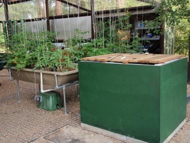 Houston Green Life Aquaponics Greenhouse