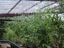 Green Life Aquaponics Greenhouse