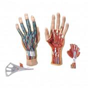 Hand Model 3 Parts