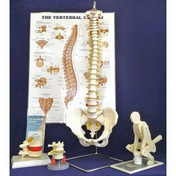 Buy ESP Manual Handling Kit - Deluxe (ZKJ-308-D) sold by eSuppliesMedical.co.uk