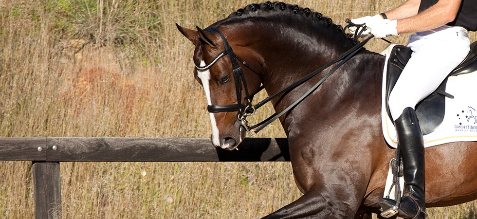 Double bits and Double bidles for dressage or showing