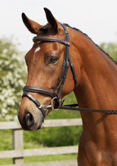 Jeffries IR Bridle for Poll Relief and comfort