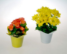 These sensational 4 inch potted plants are a perfect value to send good cheer