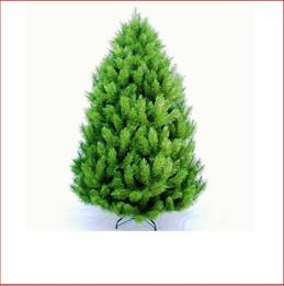 Edinburgh Pine 1.98m