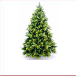 Oxford Spruce  1.98m