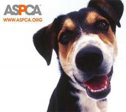 revaspca-donation-300x225.jpg