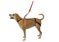 The Horgan Harness: A No Pull Back Leg Dog Harness
