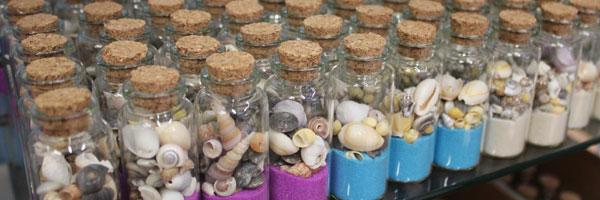 seashells  starfish  beach  coastal  u0026 nautical decor for