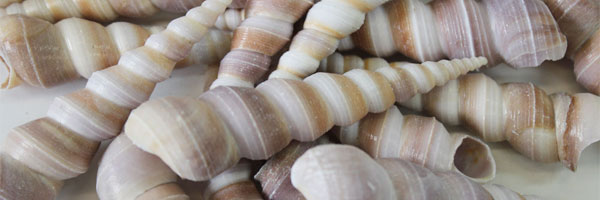 Craft Shells