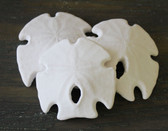 Arrowhead Sand Dollar 3-3.5""