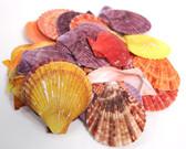 Colored Pectin Nobolis Seashells - 1kg