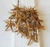 "1"" Florida Starfish - 100 Pieces"
