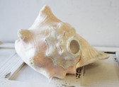 Pink Conch Horn
