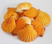 Orange Pectins