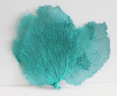 Sea Green Sea Fan