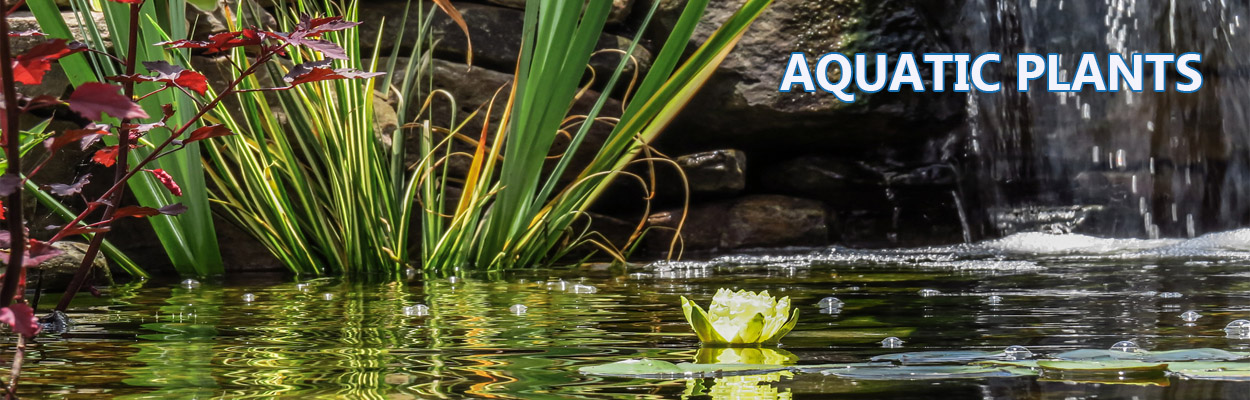 aquatic plant packages forwater gardens