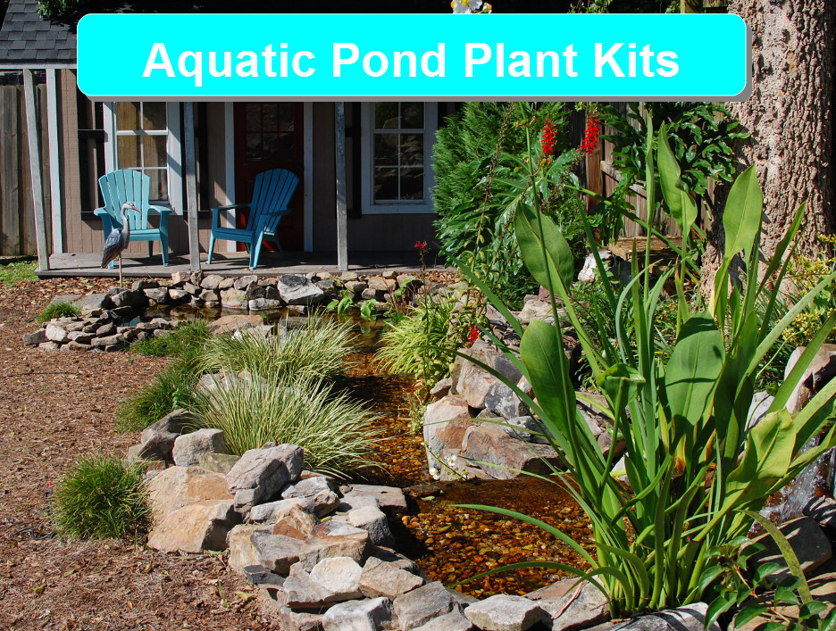 Aquatic Pond Plant Kits