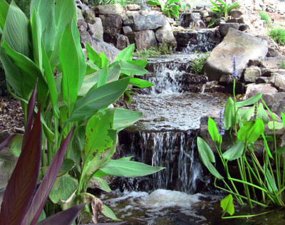 vanishing falls with aquatic pond plants