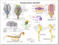 Equine Chart, Neurological