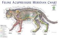 Feline Acupressure Chart