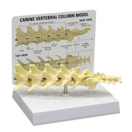 Canine 5-piece Vertebrae Model