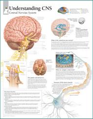 Central Nervous System Poster