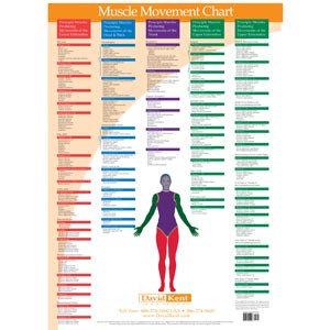 Muscle Movement Chart