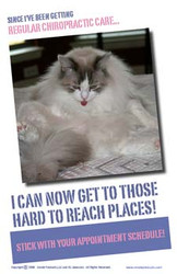 Cat Poster- Regular Chiropractic Care