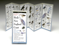 Birds of the New England Coast - Folding Guide